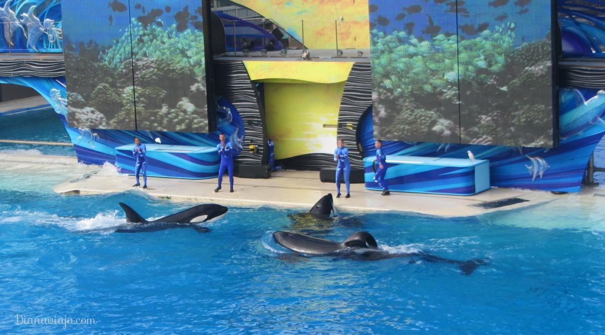 SeaWorld, Turismo com animais, Turismo, San Diego