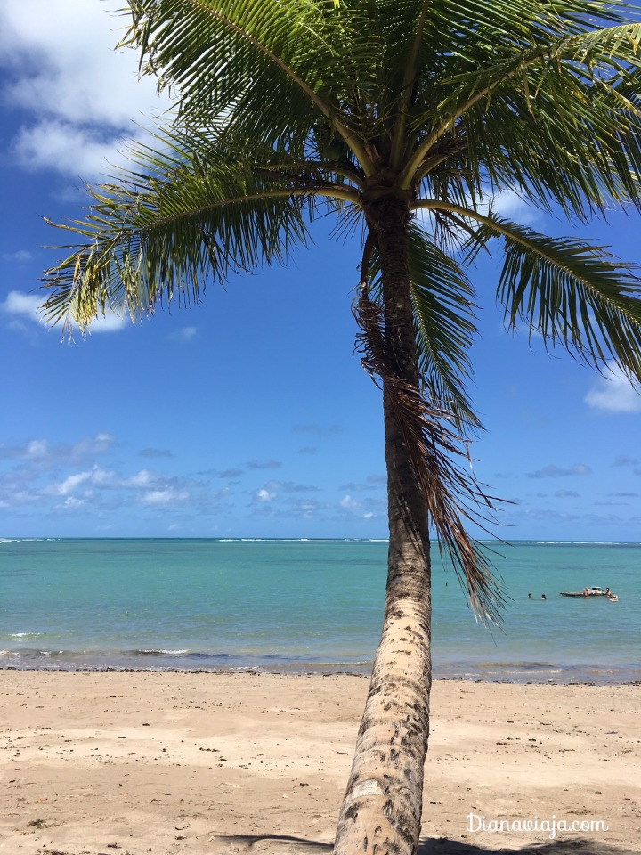 Praia do Patacho, Alagoas, Patacho
